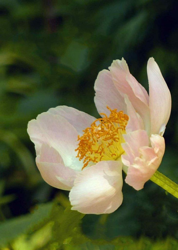 Whitish yellow Flower
