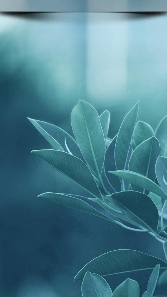 Pale grey bluish flower