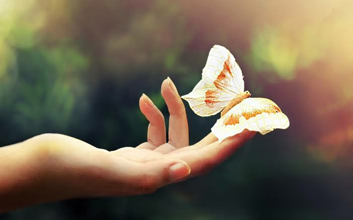 Hand touching the butterfly